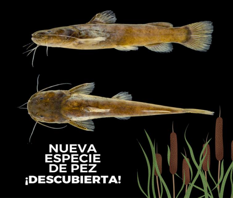 NuevaEspecie-UniversidadIndoamerica