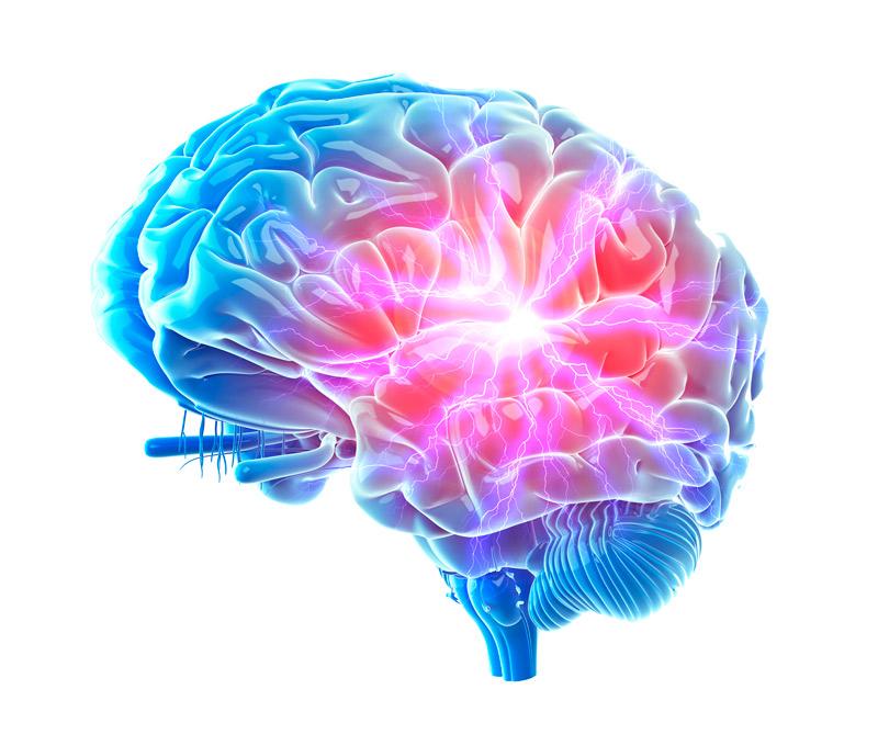 blindaje en el cerebro