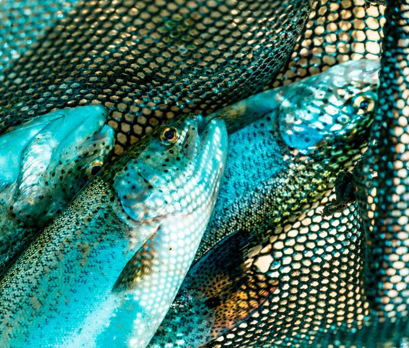 como funciona la pesca artesanal en Ecuador