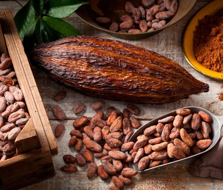 el exotico mundo de la cocina con cacao